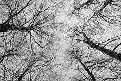 Naked trees as a background Stock Photography