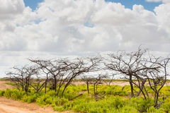 Naked trees and bushes at desert Stock Photo