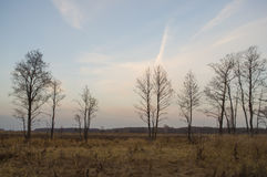 Naked trees and dry grass in the autumn evening meadow Royalty Free Stock Photography
