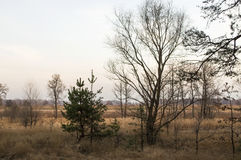 Naked trees and dry grass in the autumn evening meadow Stock Photography