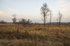 Naked trees and dry grass in the autumn evening meadow Stock Image