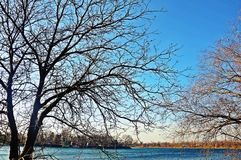 The naked trees. By the lake in the late autumn and bright blue sky Stock Photography