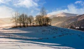 Naked trees on hillside on foggy winter sunrise Royalty Free Stock Photo