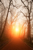 Naked trees and sunset Stock Photo