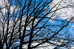 Naked twigs silhouette against blue sky Royalty Free Stock Photo