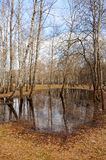 Naked white birch trees are in the spring forest in a large puddle. Vertical orientation Stock Photo