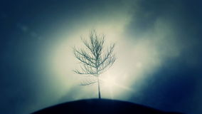 Naked Windy Tree on a Hill on a Cold Day stock video footage