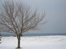 naket träd i mitt av snön royaltyfri foto