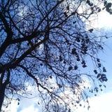 Naket träd med svart bärnsten under klar blå himmel Royaltyfria Foton