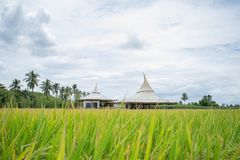 """Chata Thammachart coffee cafe in a rice field in concept """"With Nature Naturally"""""""