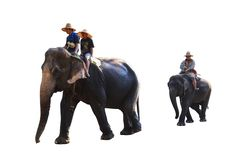 Thai Asia elephant isolated on white background stock photos