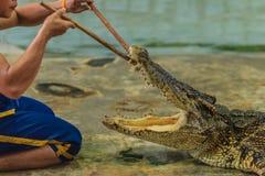 Nakhon Pathom Thailand - Maj 18, 2017: Riskabla krokodilshower på Royaltyfri Foto