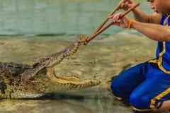 Nakhon Pathom Thailand - Maj 18, 2017: Riskabla krokodilshower på Royaltyfri Bild