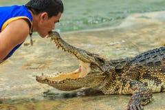 Nakhon Pathom Thailand - Maj 18, 2017: Riskabla krokodilshower på Arkivfoto