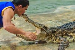 Nakhon Pathom, Thailand - May 18, 2017: Risky crocodile shows at Royalty Free Stock Images