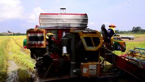 NAKHORN RATCHASIMA THAILAND - MAY 25, 2015 Harvesting paddy harvesters in rice field stock footage