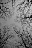 Nakna filialer för träd royaltyfri fotografi