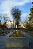 Nakna träd i en höst, solig dag arkivfoto