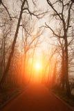 Nakna träd och solnedgång Arkivfoto
