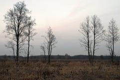 Nakna träd och torrt gräs i höstaftonängen Arkivfoto