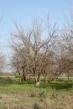 nakna trees Royaltyfri Bild