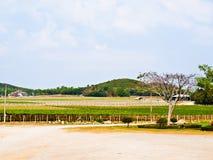 Ναυπηγείο κρασιού σε Nakorn Ratchasima, Ταϊλάνδη Στοκ Φωτογραφίες