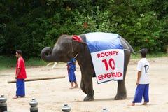 NAKORNPATHOM TAILANDIA, el 20 de junio:  Performin del juego del juego de los elefantes Fotos de archivo libres de regalías
