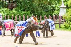NAKORNPATHOM THAILAND, June 20:  Elephants play game  performing Royalty Free Stock Photography