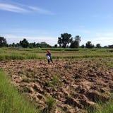 NAKORNRACHASEEMA, ΤΑΪΛΑΝΔΗ 8 ΙΟΥΝΊΟΥ 2014: Καλλιέργεια αγροτών Στοκ φωτογραφία με δικαίωμα ελεύθερης χρήσης