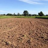NAKORNRACHASEEMA, ΤΑΪΛΑΝΔΗ 8 ΙΟΥΝΊΟΥ 2014: Καλλιέργεια αγροτών Στοκ Εικόνα