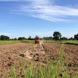 NAKORNRACHASEEMA, THAILAND-JUNE 08, 2014: Peasant farming Stock Photo