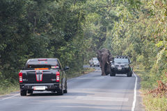 Nakornratchasima, Thailand - February 20, 2016: Park Rangers Aut. Horities try to use the car to guide the Elephants back into the forest Royalty Free Stock Photo