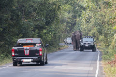 Nakornratchasima, Thailand - February 20, 2016: Park Rangers Aut. Horities try to use the car to guide the Elephants back into the forest Stock Images