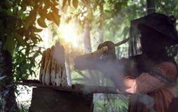Nakornsrithammarat, Tailandia - 9 de abril de 2018: Apicultor asiático que cepilla la abeja en el panal para recoger la miel con  fotos de archivo