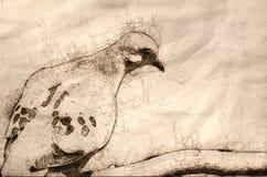 Nakreślenie Opłakuje gołąbka Patrzeje Smutny ilustracji