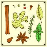 Nakreśleń ziele w rocznika stylu i pikantność ilustracja wektor