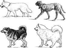 Nakreślenia odprowadzenie psy royalty ilustracja