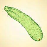 Nakreślenia smakowity zucchini w rocznika stylu ilustracji