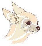 Nakreślenie śliczny chihuahua Hua pies ilustracji
