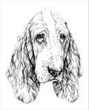 Nakreślenie śmieszny Basset Hound pies również zwrócić corel ilustracji wektora Obraz Royalty Free