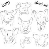 Nakreślenie świnia Rysunkowa świnia i wieprzowina Świniowaty symbol, logo, ikona, przeciw zdjęcia royalty free