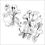 Nakreślenie atrament kwitnie na białym tle wektor Fotografia Stock
