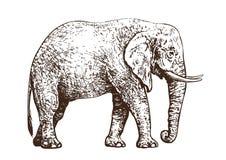Nakreślenie chodzić Afrykańskiego słonia Rocznika ręka rysujący wektor ilustracja wektor