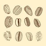Nakreślenie kawowe fasole rysuje tła trawy kwiecistego wektora Zdjęcie Royalty Free