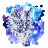 Nakreślenie kot royalty ilustracja