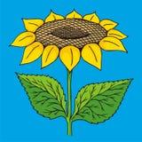 nakreślenie słonecznik ilustracji