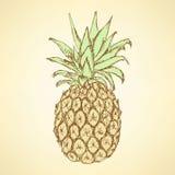 Nakreślenie smakowity ananas w rocznika stylu ilustracji