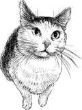 Nakreślenie smutny domowy kot ilustracja wektor