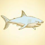 Nakreślenie straszny rekin w rocznika stylu ilustracji