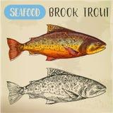 Nakreślenie strumyka pstrąg lub squaretail Owoce morza, ryba ilustracja wektor